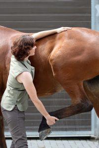 Osteopathische Behandlung der Hüfte