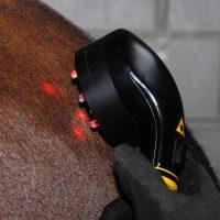 Pferdetherapie Richelmann - Die Pferde-Osteopathen: Physiotherapie