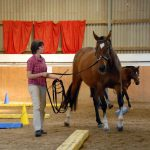 Die Pferde-Osteopathen - Trainingstherapie