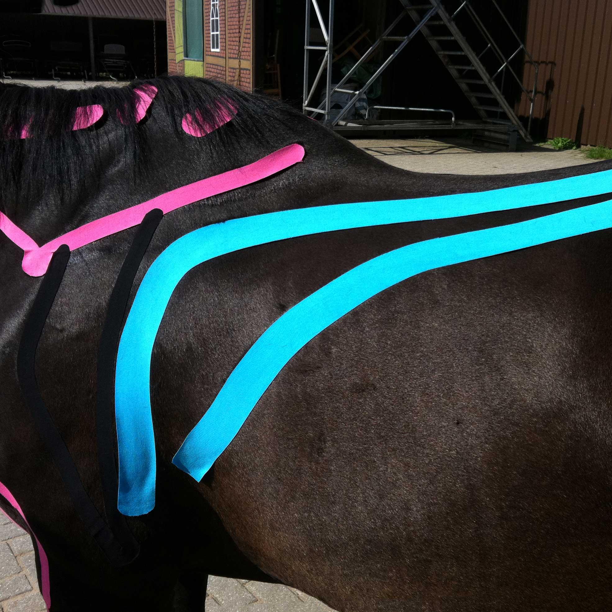 Pferdetherapie Richelmann – Die Pferde-Osteopathen: EquiK-Taping