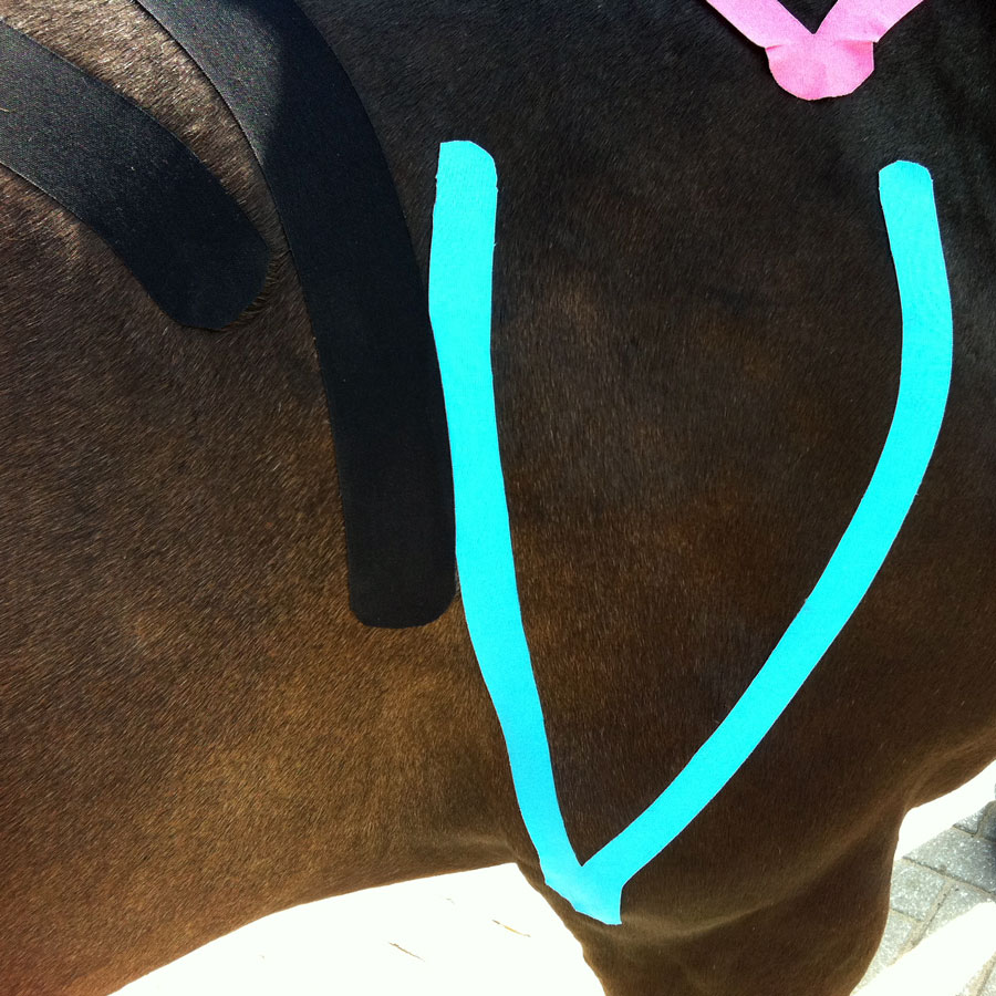 Pferdetherapie Richelmann - Die Pferde-Osteopathen: EquiK-Taping
