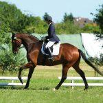 Pferdetherapie Richelmann - Die Pferde-Osteopathen: Trainingstherapie